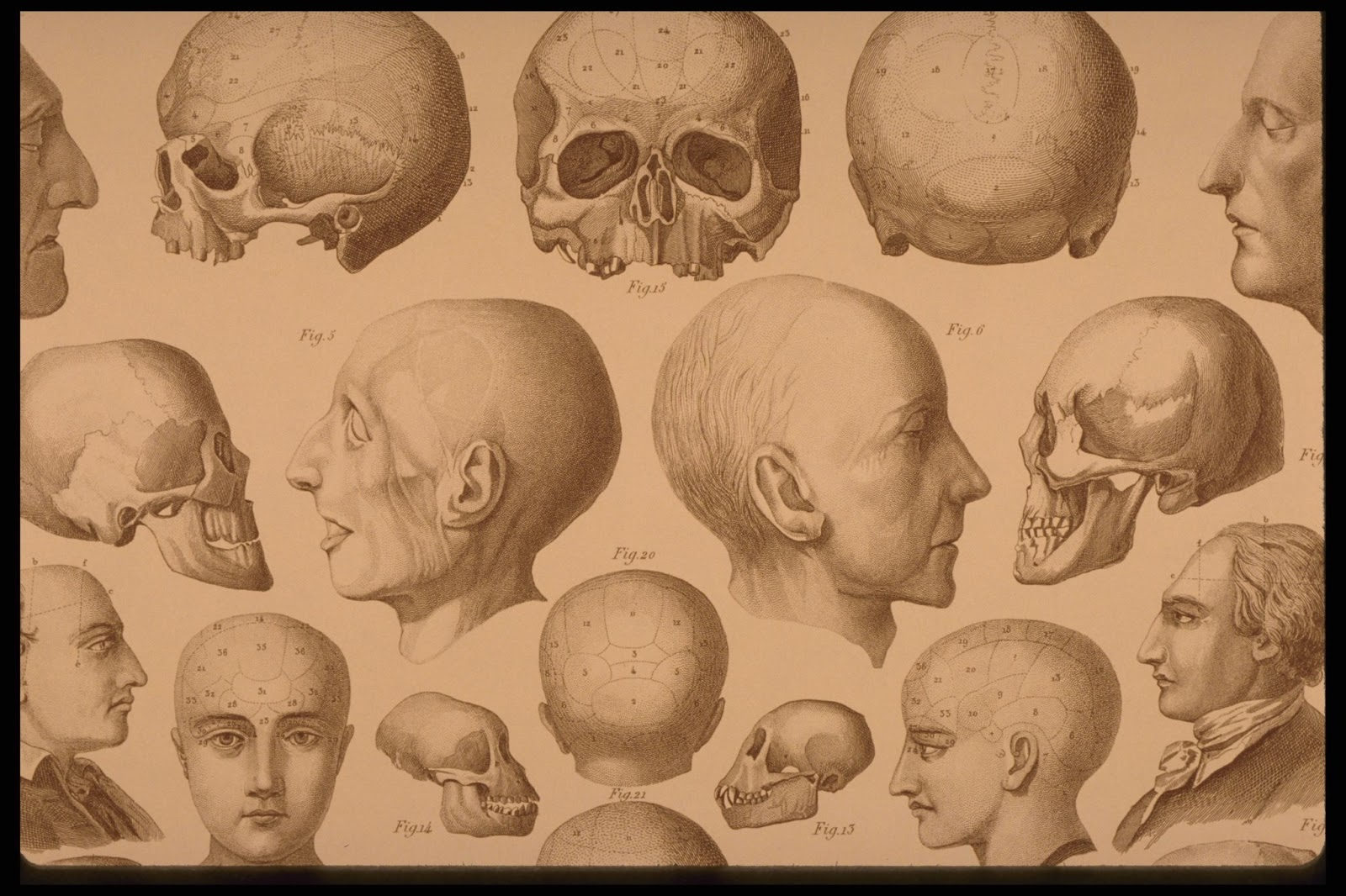 Free Vintage Prints From An Antique Anatomy Textbook The Graffical