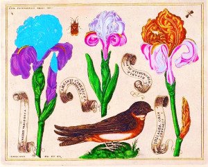 Free Vintage Images - Botanical