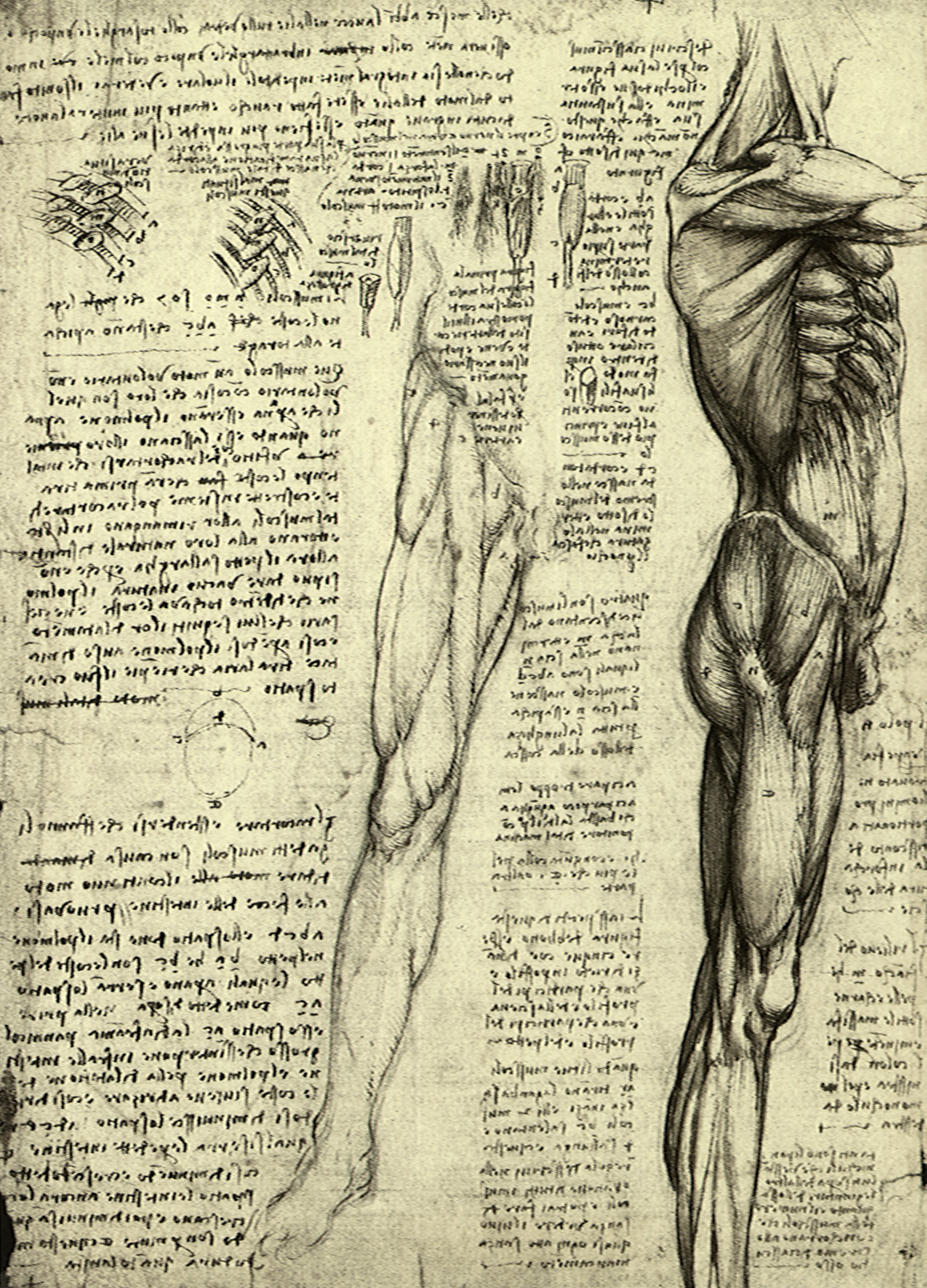 Free Vintage Anatomy Ephemera Archives - The Graffical Muse