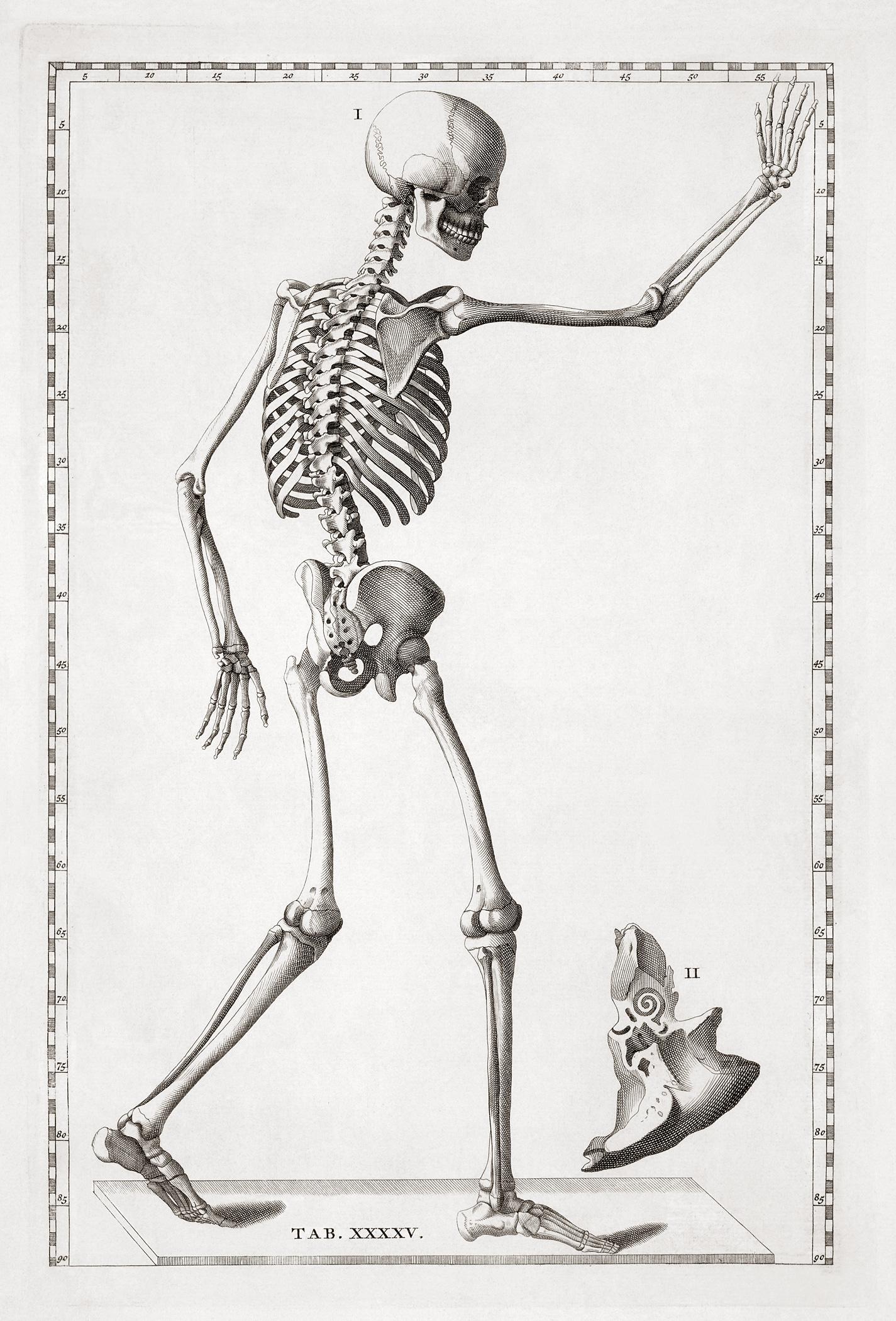 Free Vintage Anatomy Ephemera Archives - The Graffical Muse