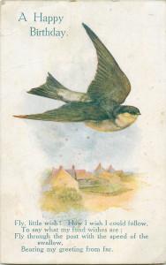 bird 1 card