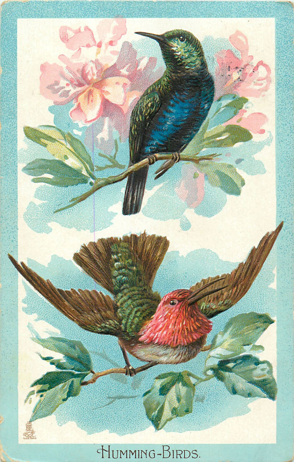 Vintage hummingbird illustrations greeting card the graffical muse vintage greeting card m4hsunfo