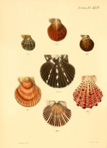 Vintage Seashell Print 3