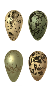 Vintage Bird Eggs Illustration