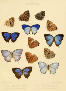 Vintage Butterfly Illustrations