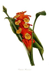 Vintage Flower Print Clip Art