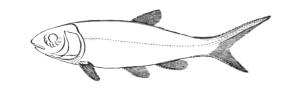 Vintage Clip Art Fish