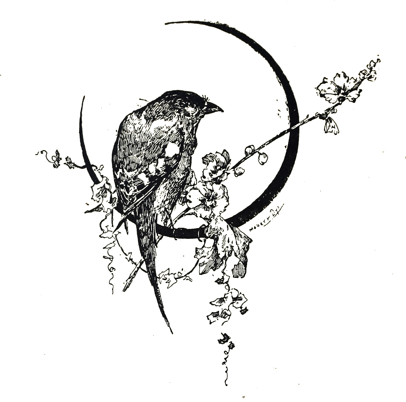 Vintage Love Birds Illustration