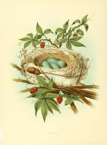 Vintage Bird Nest Print