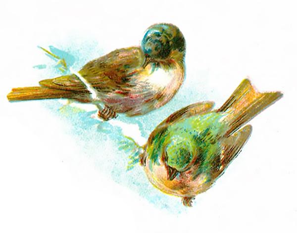 Vintage Bird Clipart 95